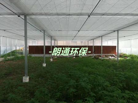 农科所种植大棚的负压风机+水帘项目